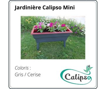 copy of Flowerbox Calipso...